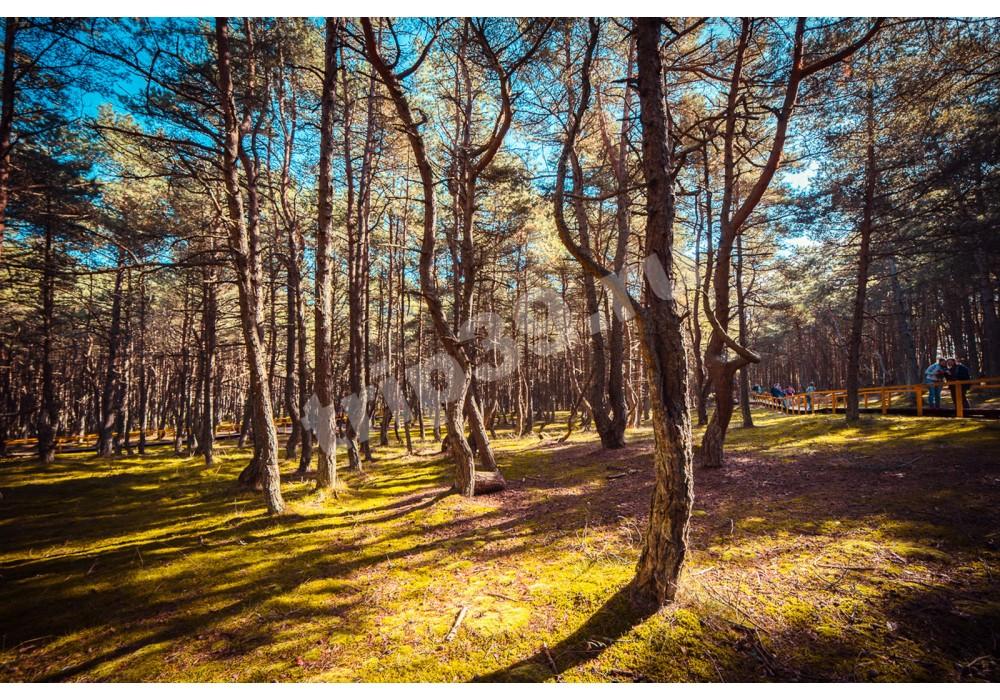 Экскурсия в Национальный парк Куршская коса с посещением орнитологической станции